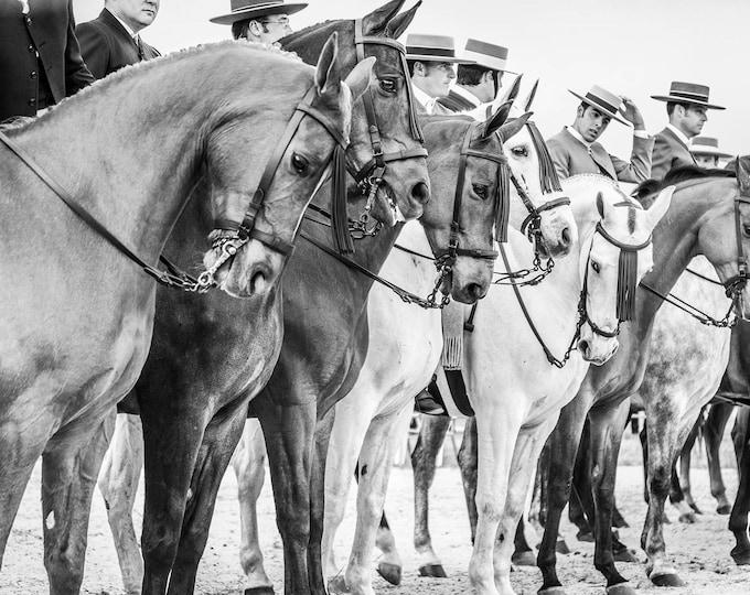 SPANISH HORSES PRINT in black and white