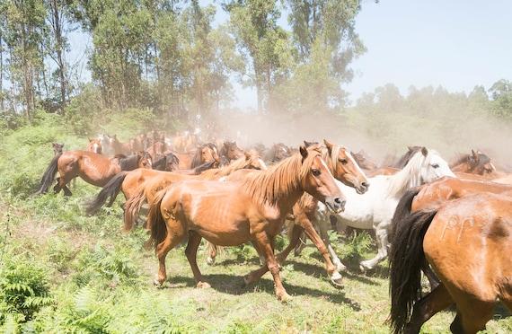 Herd of horses, THE HERD, Horse Print, Wild Horses, Equine Prints, Animal Prints, Spanish Prints