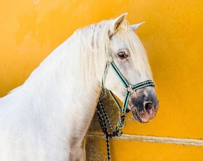 WHITE HORSE PRINT, Horse Wall Art