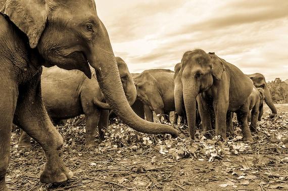 Elephant Print, Herd Of Elephants,Sr Lanka,Travel Prints,Animals,Nature,Photographic print,Limited Edition Print