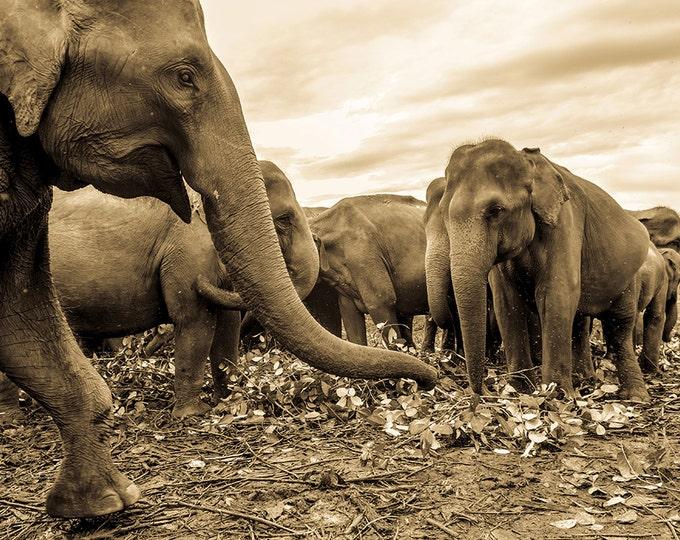 LARGE ELEPHANT PRINT