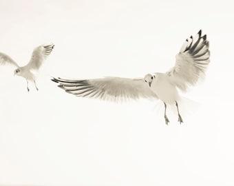 SEAGULLS 1. Seagull Print, Birds Flying, Beach Print, Wildlife Picture, Dorset Art, Photographic Print