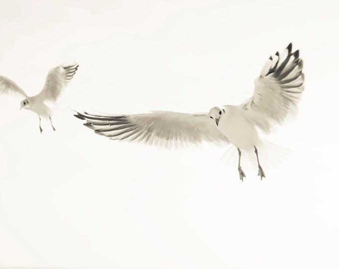 BLACK AND WHITE Seagull Print