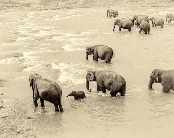 RIVER ELEPHANTS PRINT, Wildlife Photography