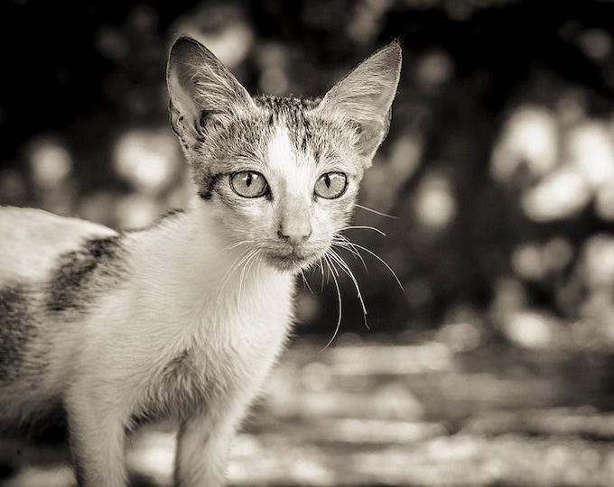 BEAUTIFUL CAT PRINT, Animal Art Decor