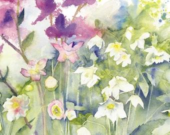 Helebores Watercolour Print