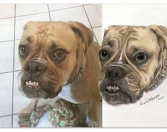 Custom Pet Portraits - Head Shot Sample - The Perfect Gift - Pet Lover Gift Idea - Sample of a Boxer/Bull Dog Mix