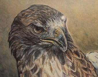 Red Tail Study #1
