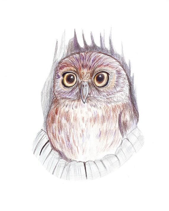 Peint petit hibou. Crayons de dessin dart art de décoration | Etsy