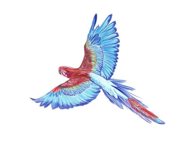 Dibujo loro azul. Para colorear, lápices, arte de la decoración de casa pared, decoración de aves, arte animal realista, arte lápices de loro ...