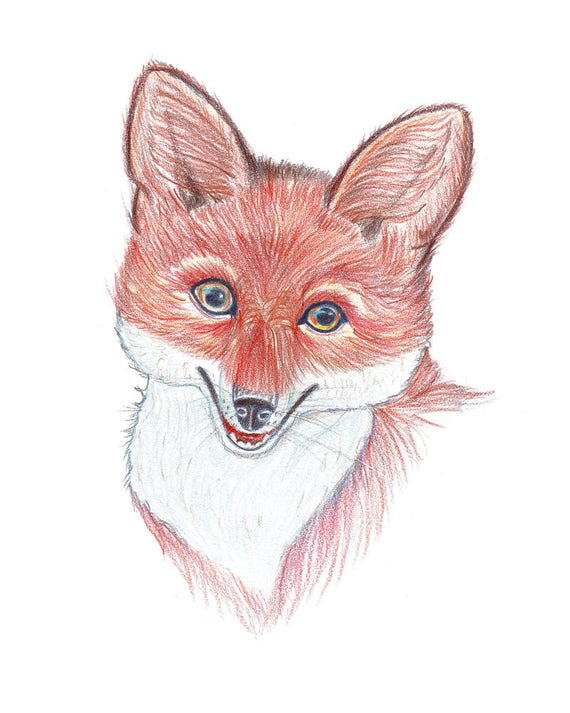 Retrato Rojo Zorro Zorro De Dibujo Lapices De Colores Animal Etsy