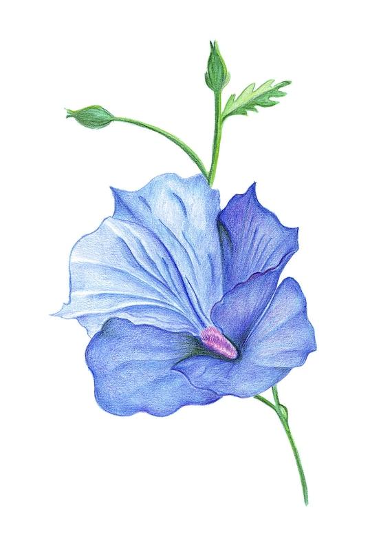 Peint La Fleur Dhibiscus Dessin Fait à La Main Dessin Au Etsy