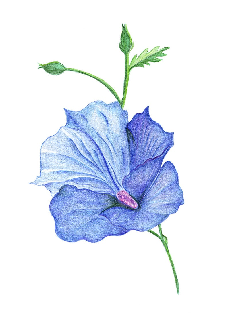 Painted Hibiscus Flower Handmade Drawing Pencil Drawing Etsy