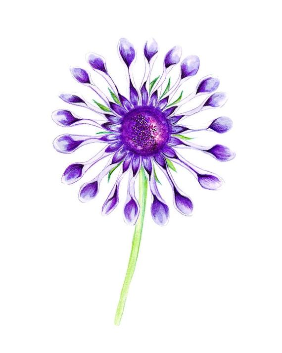 Violet Fleur Exotique Crayons De Couleur Dessin Fleur Art Etsy