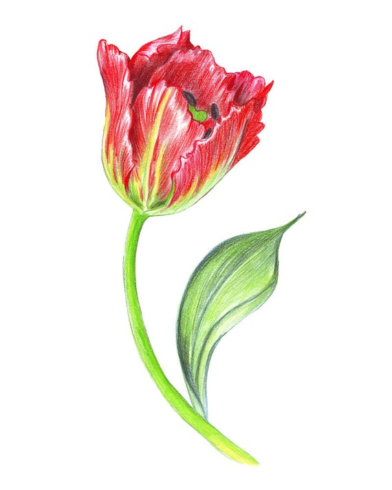 Tulipe Peint Rouge Home Wall Art Decor Crayons à Dessin Etsy
