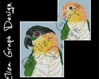 Black-headed caique, White-bellied caique CROSS STITCH Pattern, CROCHET Graphghan Blanket Pattern