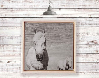 Camargue horse, horse, horse print, art print, wood art, horse photo on wood, horse photo, white horse