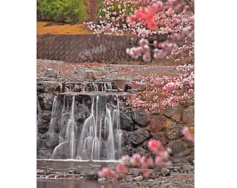 Japan, Cherry Blossoms, Waterfalls, Pink, Spring, Home Decor, Wall Art, Travel Photos, Fine Art, Photography, Canvas, Metal, Matted Print