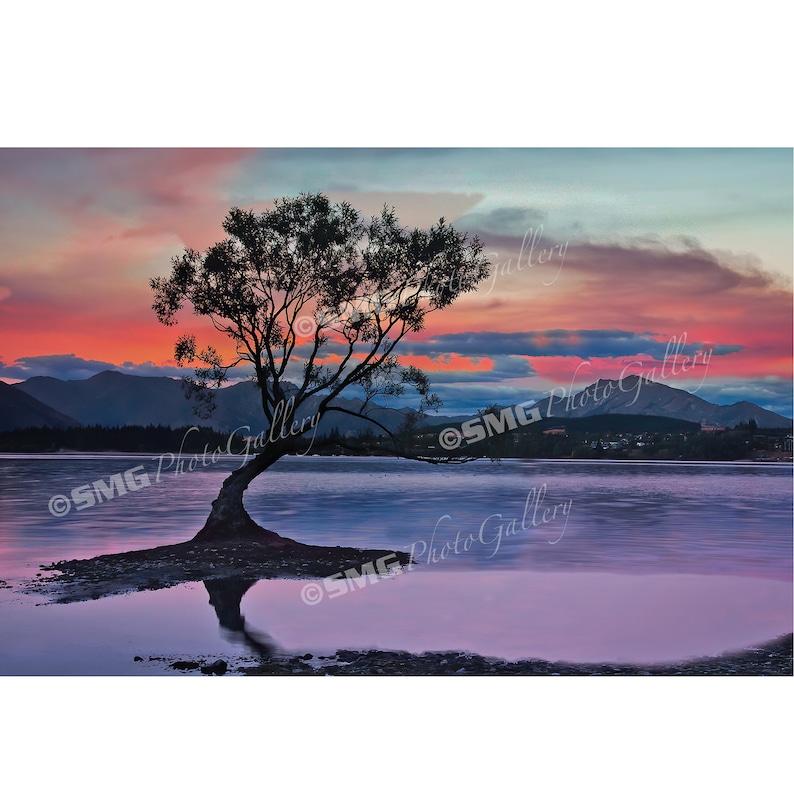 New Zealand Photo Lake Wanaka Sunrise Print Lone Tree image 0