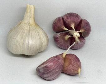 Georgian Crystal -- (Hardneck) -- 1 lb of Seed Garlic