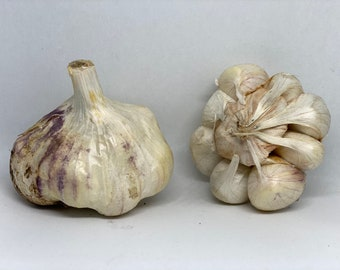 Inchelium Red -- (Softneck) -- 1 lb of Seed Garlic