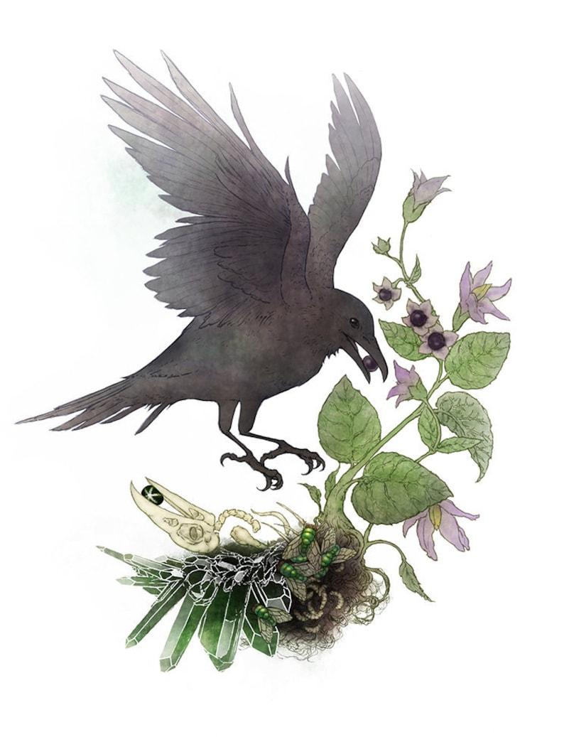 8.5 x 11 Nature Art Print raven bird bones gemstones crystals botanical belladonna deadly nightshade gothic Crow Life and death cycle