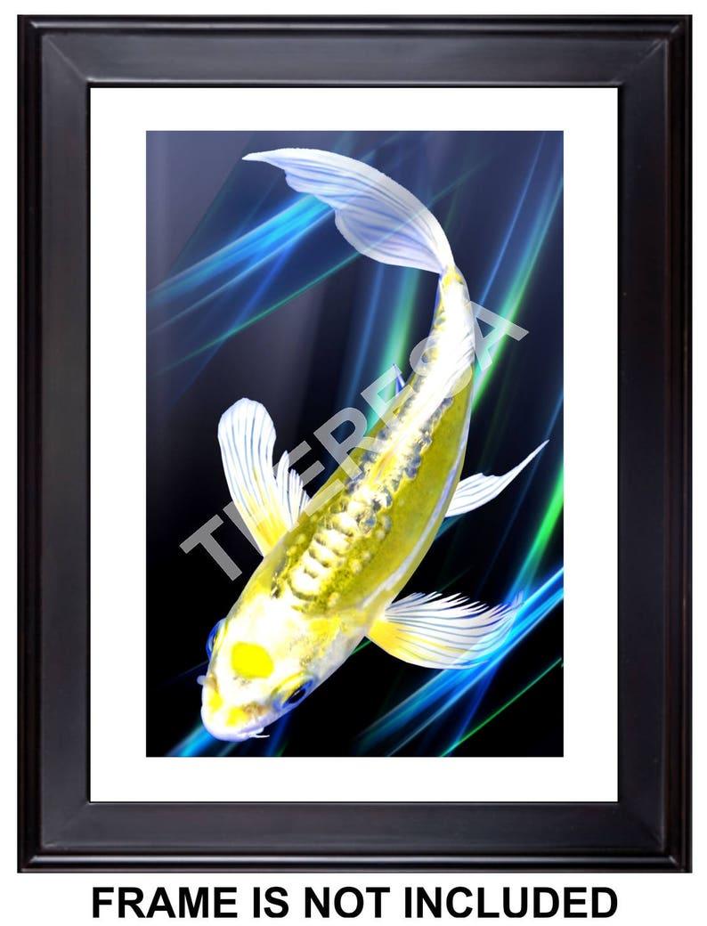 Twilight In Koi Pond >> Free Shipping Tancho Kin Kikokuryu Koi Giclee Print 12 Etsy