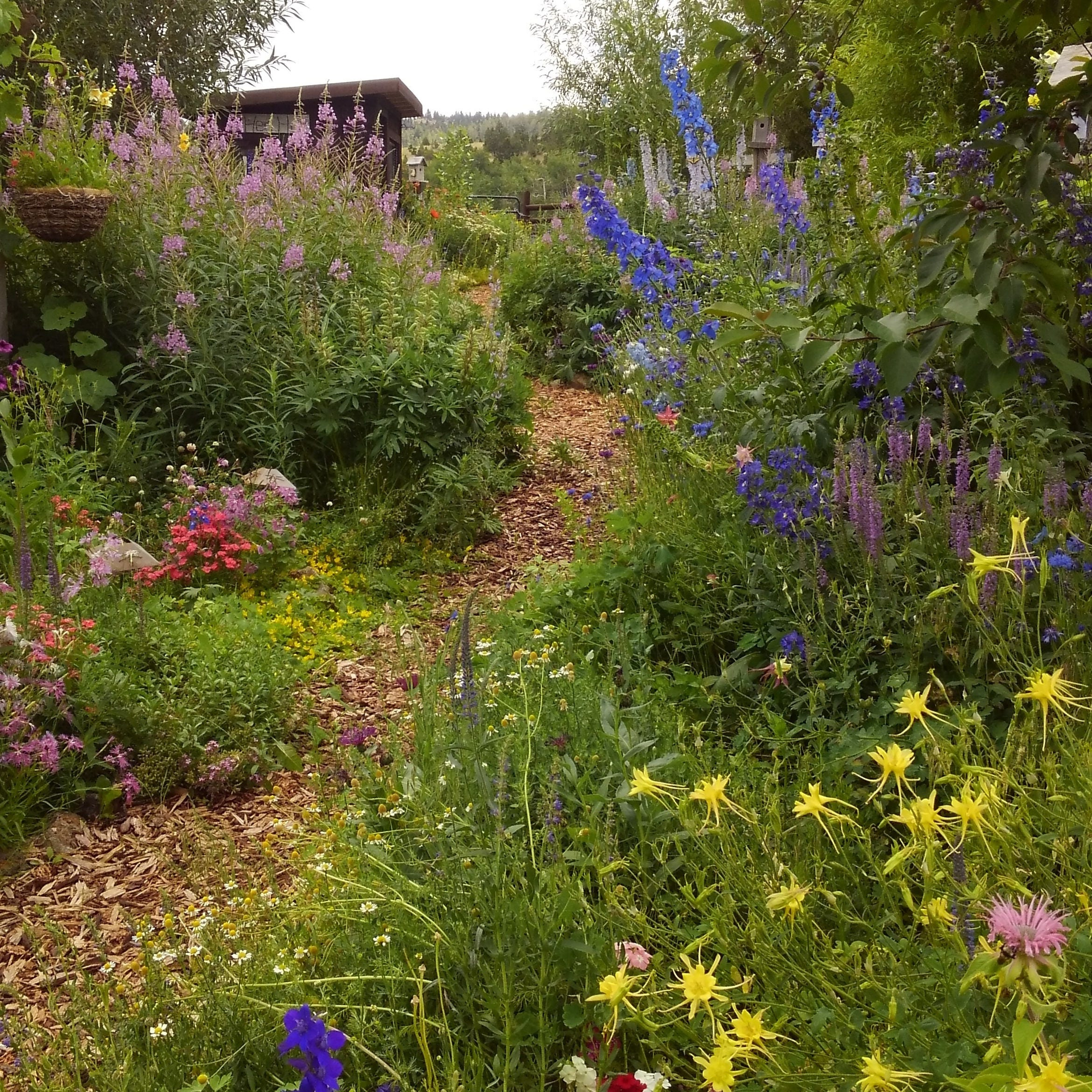 Heirloom Flower Seed Mix Rare Perennial Seed Mix Wildflower Etsy