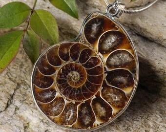 Ammonite etsy opalized ammonite fossil pendant s m l ammonite jewelry ammonite pendant ammolite cabochon ammonite necklace fossil necklace e0282 aloadofball Images