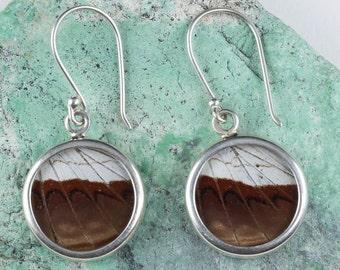 3.5cm Real Butterfly Wing Earrings in Sterling Silver - Butterfly Earrings & Butterfly Jewelry J773