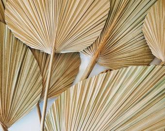 Dried fan leaf / Palm spears / Palms / Everlasting flowers / Decor / Dry flowers / Flower arrangements / Sun palm