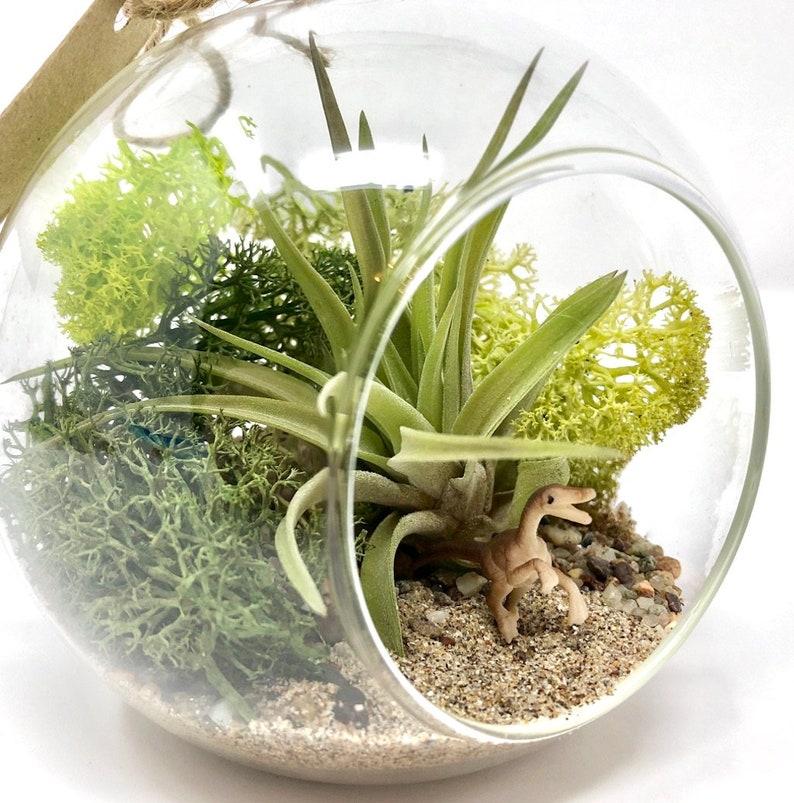 Velociraptor Air Plant Terrarium Kit Miniature Garden Etsy