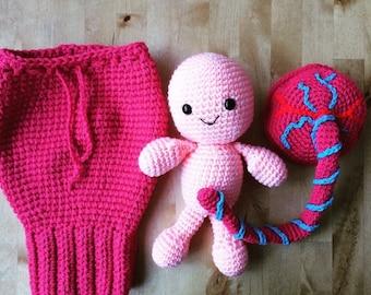 Uterus, placenta, baby and umbilical cord. Teaching aid.