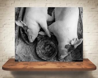 Sleeping Pigs Photograph - Fine Art Print - Black White Photo - Wall Decor - Farmhouse Decor - Pig Pictures - Farm Photography - Animals