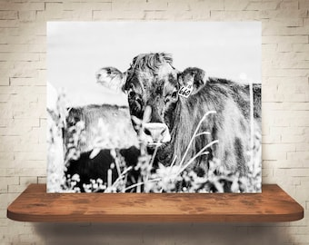 Jersey Cow Photograph - Fine Art Print - Black White Photography - Wall Art - Wall Decor -  Farm Pictures - Farmhouse Decor - Cows