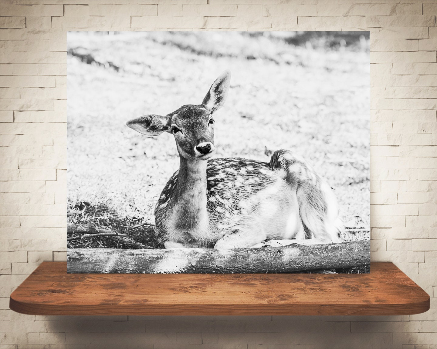 Wall Art Deer Photograph Woodland Animal Pictures Fine Art Print Black White Photo Country Decor Nature Prints