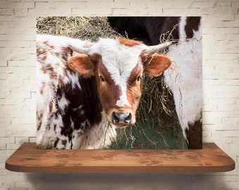 Longhorn Cattle Cow Photograph - Fine Art Print - Color Photo - Wall Art - Rustic Decor - Wall Decor - Pictures of Cows - Farmhouse Decor