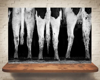 Cow Photograph - Black White Photography - Fine Art Print - Farm Wall Decor - Pictures of Cows - Farmhouse Decor - Cow Tails Wall Art