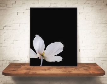 White Flower Photograph - Fine Art Print - Wall Art - Floral Decor - Wall Decor - Pictures of Flowers - Gifts - Floral Decor