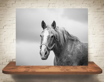 Horse Photograph - Fine Art Print - Black & White Photography - Equine Wall Art - Wall Decor -  Horse Pictures - Farmhouse Decor - Horses