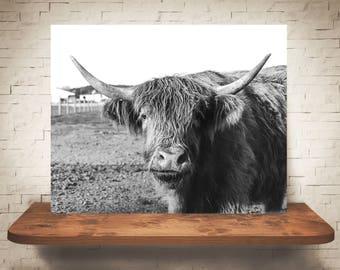 Scottish Highland Cattle Photograph - Fine Art Print - Black White Photography - Wall Art Decor - Farmhouse Decor - Cow Pictures - Cows