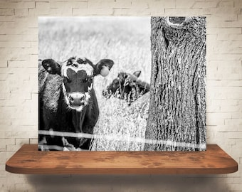 Cow Photograph - Fine Art Print - Black & White Photography - Wall Art - Home Decor - Wall Decor -  Farm Pictures - Farmhouse Decor - Cows