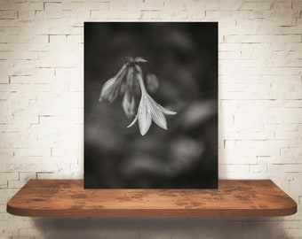 Harebell Flower Photograph - Fine Art Print - Black White Photo - Wall Art - Floral Decor - Wall Decor - Pictures of Flowers