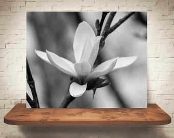 Magnolia Photograph - Fine Art Print - Black White Photo - Wall Art - Floral Decor - Wall Decor - Pictures of Flowers - Neutral Decor