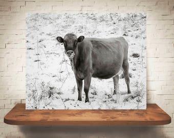 Jersey Cow Photograph - Fine Art Print - Black White Photography - Winter Wall Art - Wall Decor -  Farm Pictures - Farmhouse Decor - Cows