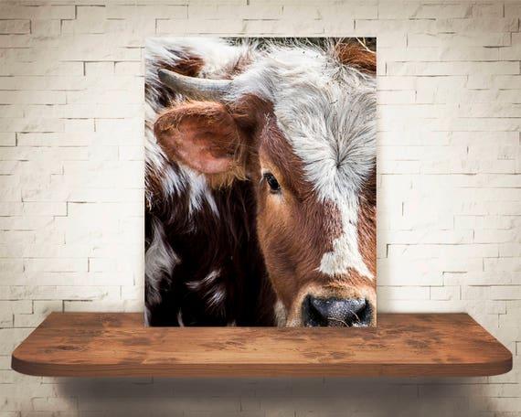 Wall Art Black White Photo Longhorn Cattle Cow Photograph Pictures of Cows Farmhouse Decor Fine Art Print Rustic Decor