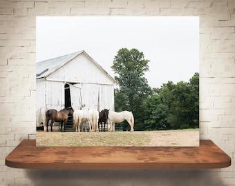 Horse Barn Photograph - Fine Art Print - Color Photo - Wall Art Decor - Farmhouse Decor - Equine Photography - Pictures of Horses