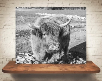 Scottish Highland Cattle Cow Photograph - Fine Art Print - Black White Photography - Wall Art Decor - Farm Pictures - Farmhouse Decor - Cows