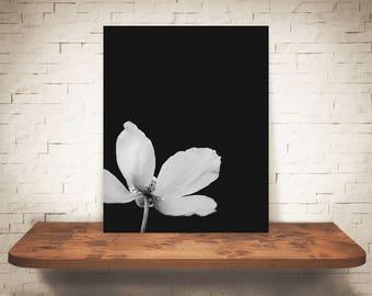 White Flower Photograph - Fine Art Print - Black White Photo - Wall Art - Floral Decor - Wall Decor - Pictures of Flowers - Floral Decor