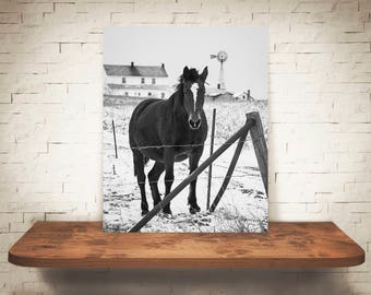 Horse Photograph - Fine Art Print - Black White Photography - Equine Wall Art - Wall Decor -  Horse Pictures - Farmhouse Decor - Horses